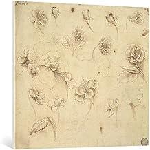 """Cuadro en lienzo: Leonardo da Vinci """"Study of flowers"""" - Impresión artística de alta calidad, lienzo en bastidor, 100x90 cm"""