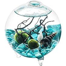 Marimo Kit - Globo de pie terrario con 3 pies, 2 bolas de musgo vivo, guijarros turquesas, conchas, ventilador de mar, centro de mesa, gran regalo para la ...