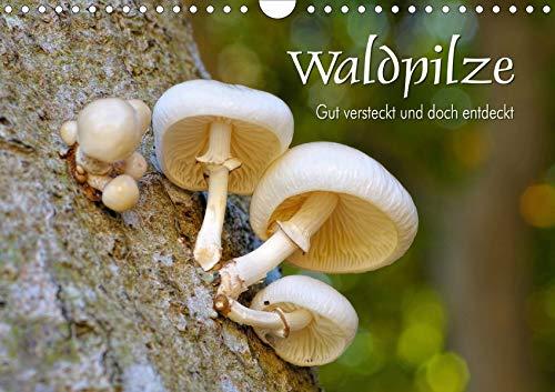 Waldpilze - Gut versteckt und doch entdeckt (Wandkalender 2019 DIN A4 quer): Eine bunte Zusammenstellung verschiedenster Pilze unserer Wälder (Monatskalender, 14 Seiten ) (CALVENDO Natur)