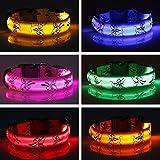 LED Hundehalsband Sicherheits Leuchthalsband