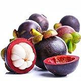 Jennem Samenhaus - 10 teile/beutel Mangostan Samen Garcinia Mangostana Rare Fruit Seeds Hausgarten Blumensamen