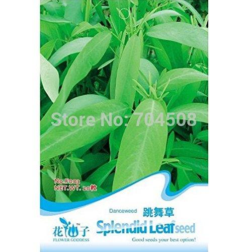 50PCS / bag Triticum aestivum Seed Cat Herbe STRAY CAT Bureau Mini Pot Semence à gazon