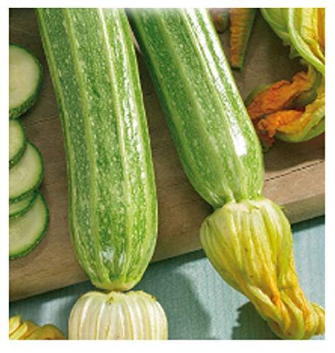 60 c.ca semi zucchino romanesco - cucurbita pepo in confezione originale prodotto in italia - zucchine romanesche