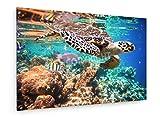 Andrey Armyagov - Echte Karettschildkröte - Eretmochelys imbricata schwimmt unter Wasser. - 60x40 cm - Leinwandbild auf Keilrahmen - Wand-Bild - Kunst, Gemälde, Foto, Bild auf Leinwand - Tiere