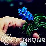 AGROBITS 100PCS mini orquídea-bonsai planta de flores para la planta de jardín de orquídea Phalaenopsis, Compra-Direct-De-china Orquidea Semilla: 2