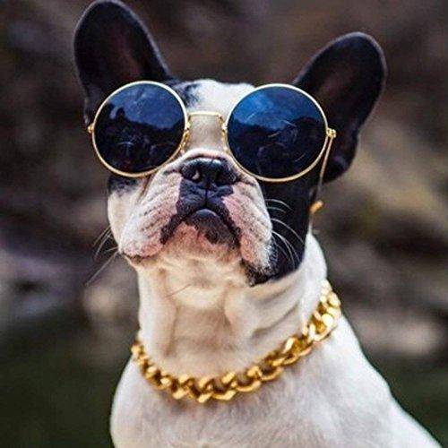 MoonNight Pet Photos Requisiten Sonnenbrille Retro Strohhut Hund Gold Halskette Glocke Kragen Katze Krawatte (Dreiteiliger Anzug)