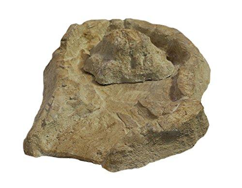 wasserkaskaden Fontane a cascata bacino con sorgente EDER Sorgente con protezione antispruzzi, beige/marrone, 53 x 40 x 8 cm