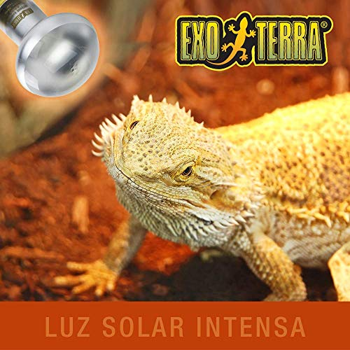 Exo Terra Intense Basking Spot Tageslicht-Wärmelampe 75W - 2