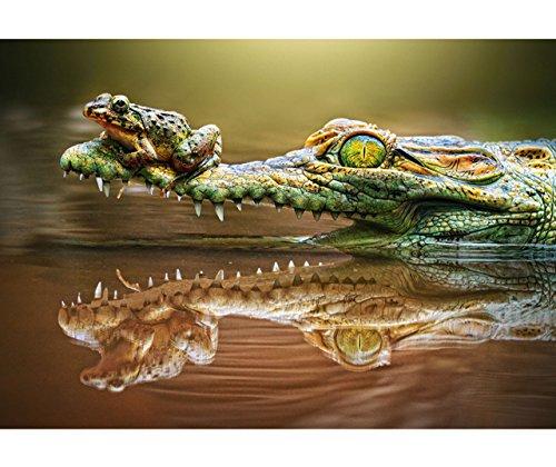 alles-meine.de GmbH Puzzle 500 Teile - Krokodil & Frosch  - Foto - Draufgänger Lurch / Frosch - Krokodile / Alligator - Bild - Tiere im Wald - See - Tier - Tierkinder / Tierpuz..