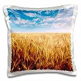 Danita Delimont - Agriculture - Wheat agriculture, Oregon, USA - US38 SWE0100 - Stuart Westmorland -...