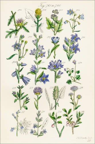 Poster 20 x 30 cm: Wildblumen, Sowerby von Ken Welsh/Design Pics - Hochwertiger Kunstdruck,...