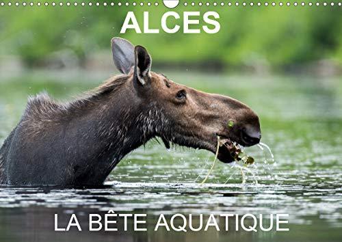 ALCES - LA BETE AQUATIQUE 2020: 13 photos d'orignaux dans leur milieu aquatique, au Quebec