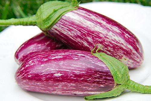 Shoopy Star Graines de concombre Vnuchek Petit-fils F1 Balcon Décapage légumes Ukraine bio