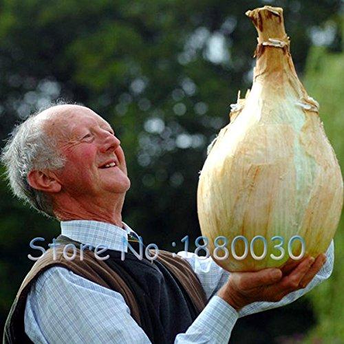 SVI Nouvelles variétés nutritives chinois géant d'oignon Graines Shallot Graines de légumes Graines de légumes Jardin 100 pcs