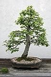 Premiumzeolith 25kg Pflanzsubstrat Bonsai Erde Akadama Dünger Zeolith Pflanzerde Erde Substrat