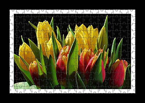 puzzle-style-pre-assembles-imprimer-mur-de-tulips-flowers-buds-flower-light-black-background-by-lisa