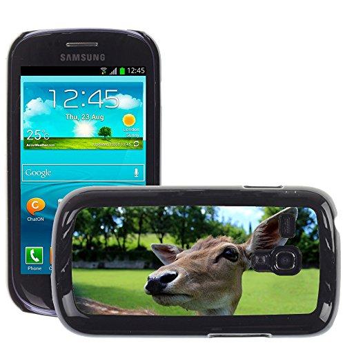 Grand Phone Cases Bild Hart Handy Schwarz Schutz Case Cover Schale Etui // M00142379 Deer Roe Tiere Park Muzzle Fawn // Samsung Galaxy S3 MINI i8190 - Galaxy Deer Handy S3 Case Samsung