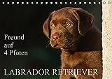 Freund auf 4 Pfoten - Labrador Retriever (Tischkalender 2019 DIN A5 quer): Der Labrador Retriever, eine der beliebtesten Hunderassen auf 13 ... (Monatskalender, 14 Seiten ) (CALVENDO Tiere)