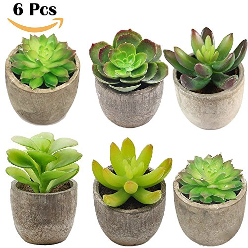 Art culos para el hogar la decoraci n con plantas for Plastico para lagunas artificiales