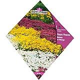 Royal Fleur - Semilla flores vivaces enanas, mezcla 2cor