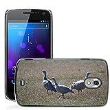 Grand Phone Cases Bild Hart Handy Schwarz Schutz Case Cover Schale Etui // M00141005 Cape Barren Gänse Gänse Tier // Samsung Galaxy Nexus GT-i9250 i9250
