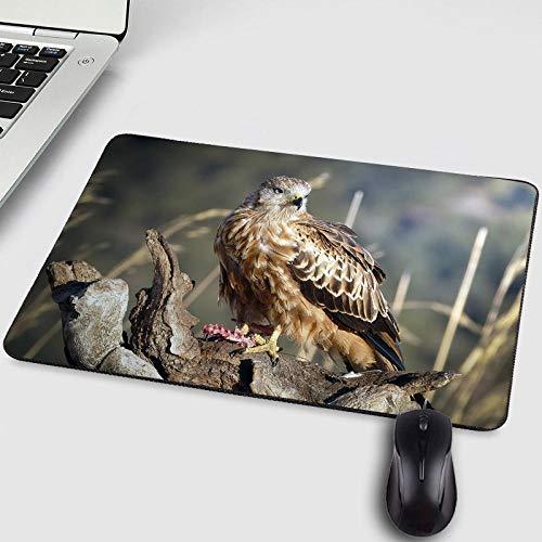 Gaming PC Mousepad Falcon Owl Tiere Haustier Katze Hund Tablet Gamer Mauspad für Dekoration Desktop und als Matte für Friend-250X290X2MM -