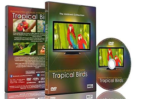 Entspannungs DVD - Tropische Vögel mit Musik oder Naturgeräuschen (Musik Dvd Mit)