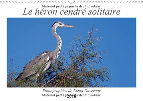 Le heron cendre solitaire 2018: L'elegant heron cendre dans differentes situations de son quotidien. (Calvendo Animaux)