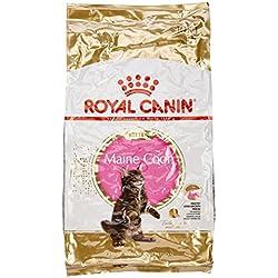 Royal Canin - Croquettes pour chaton maine coon - 10 kg