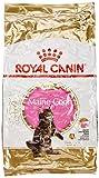 Royal Canin Katzenfutter Feline Kitten Maine Coon 36, 10 kg, 1er Pack (1 x 10 kg)