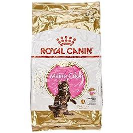 ROYAL CANIN Cibo Secco per Gatti Maine Coon Kitten – 10000 gr