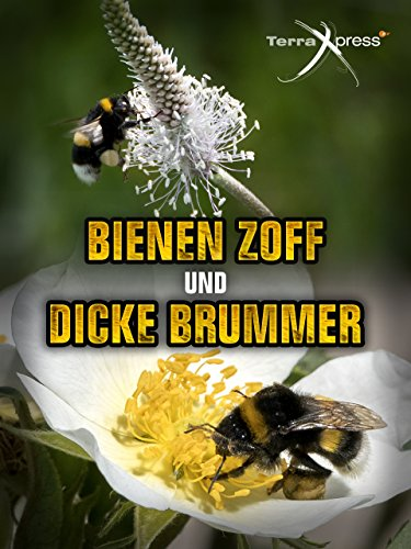 Bienen-Zoff und dicke Brummer