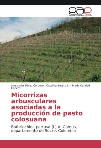 Micorrizas arbusculares asociadas a la producción de pasto colosuana: Bothriochloa pertusa (L) A. Camus, departamento de Sucre, Colombia por Alexander Pérez Cordero