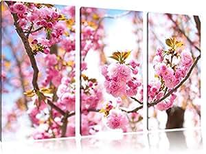 Bei fiori di ciliegio 3 pezzi di immagini su tela 120x80 su tela, XXL Immagini enormi completamente Pagina con la barella, arte stampa sulla foto muro con cornice, gänstiger come un dipinto o un dipinto ad olio, non un manifesto o un banner