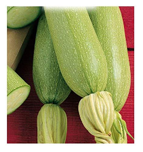 inception pro infinite 75 c.ca semi zucchino bianco di trieste - cucurbita pepo - in confezione originale - prodotto in italia - zucchine - zi011