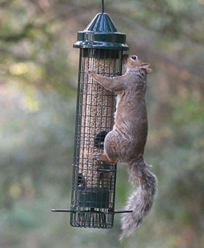 Jacobi Jayne SB-1057 Squirrel Proof Bird Feeder - Squirrel Buster - Marauders off! Guaranteed Squirrel and Large Bird… 5