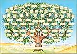 'Family Tree' Poster Graphique « Arbre généalogique », l'arbre généalogique pour Auto-compléter, Papier spécialisé Dense, Trace 7, Lien Direct de parenté.