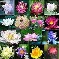 Virtue 25 Dwarf Lotus Seeds Mixed Colors Aquatic Water Garden Indoor/Outdoor