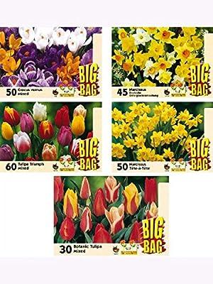 225 Blumenzwiebeln BIG-BAG-MEGA-Sortiment Narzissen-Krokusse-Tulpen von Kiepenkerl - Blumenzwiebeln - Du und dein Garten