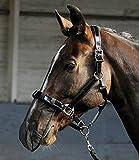 Pferde Nasenfliegenschutz