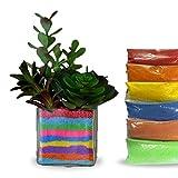 Plants For Terrariums Review and Comparison