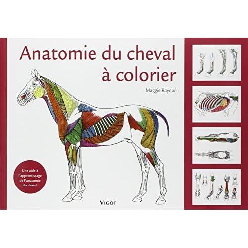 Anatomie du cheval à colorier : Une aide à l'apprentissage de l'anatomie du cheval de Maggie Raynor ,Céline Mespoulhès-Rivière (Traduction) ( 13 mars 2008 )