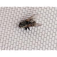 Inoxia Ltd - Malla de acero inoxidable para moscas - 30 cm x 30 cm