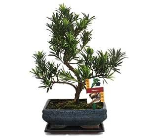 Bonsai Gardening: How To Grow Bonsai For Beginners