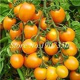 Pinkdose Bonsai 100 Stück Rainbow Zwerg Tomate, seltene Tomate, süße Bonsai Bio köstliches Gemüse & amp; Obstpflanze für den Garten: 2