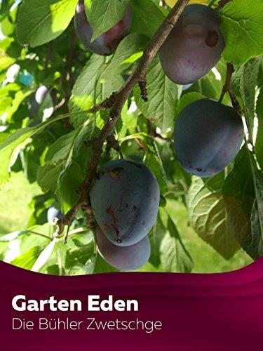 Garten Eden - Blaue Königin aus Baden - Die Bühler Zwetschge