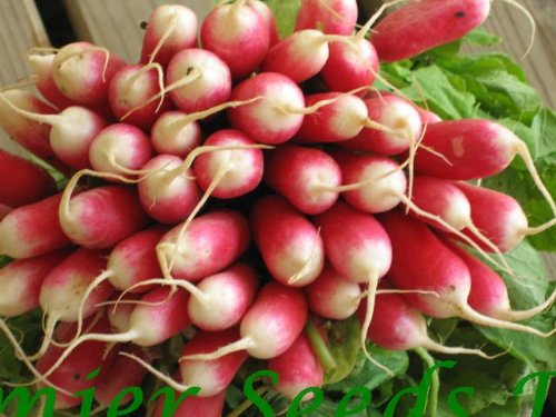 premier-seeds-direct-org088-radish-french-breakfast-2-organic-seeeds-pack-of-1200