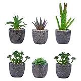 BELLE VOUS Plante Artificielle (Lot de 6) - Mini Fausse Plante Succulente avec Pots - Petite Plante Décorative en Plastique - Parfaites pour la Décoration Intérieur, Maison, Bureau, Mariages...