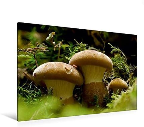 Premium Textile Toile 45 cm x 30 cm paysage de champignon avec chaussettes – Velours paxille Pied Noir   Le Roi De La Quantité