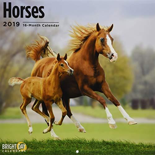Horses 2019 (ANIMALS)
